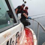 bloody tuna decks