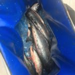 Kevin Teasdale Salmon Fishing Charters 1