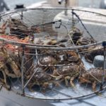 crabbing in oregon with T-Sea Charters 2