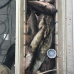 TSea Charters Bottom Fishing Kevin Teasdale 11