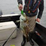 TSea Charters Bottom Fishing Kevin Teasdale 13